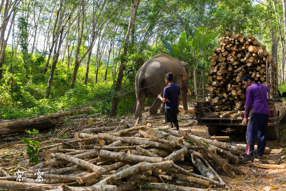elephant deforestation