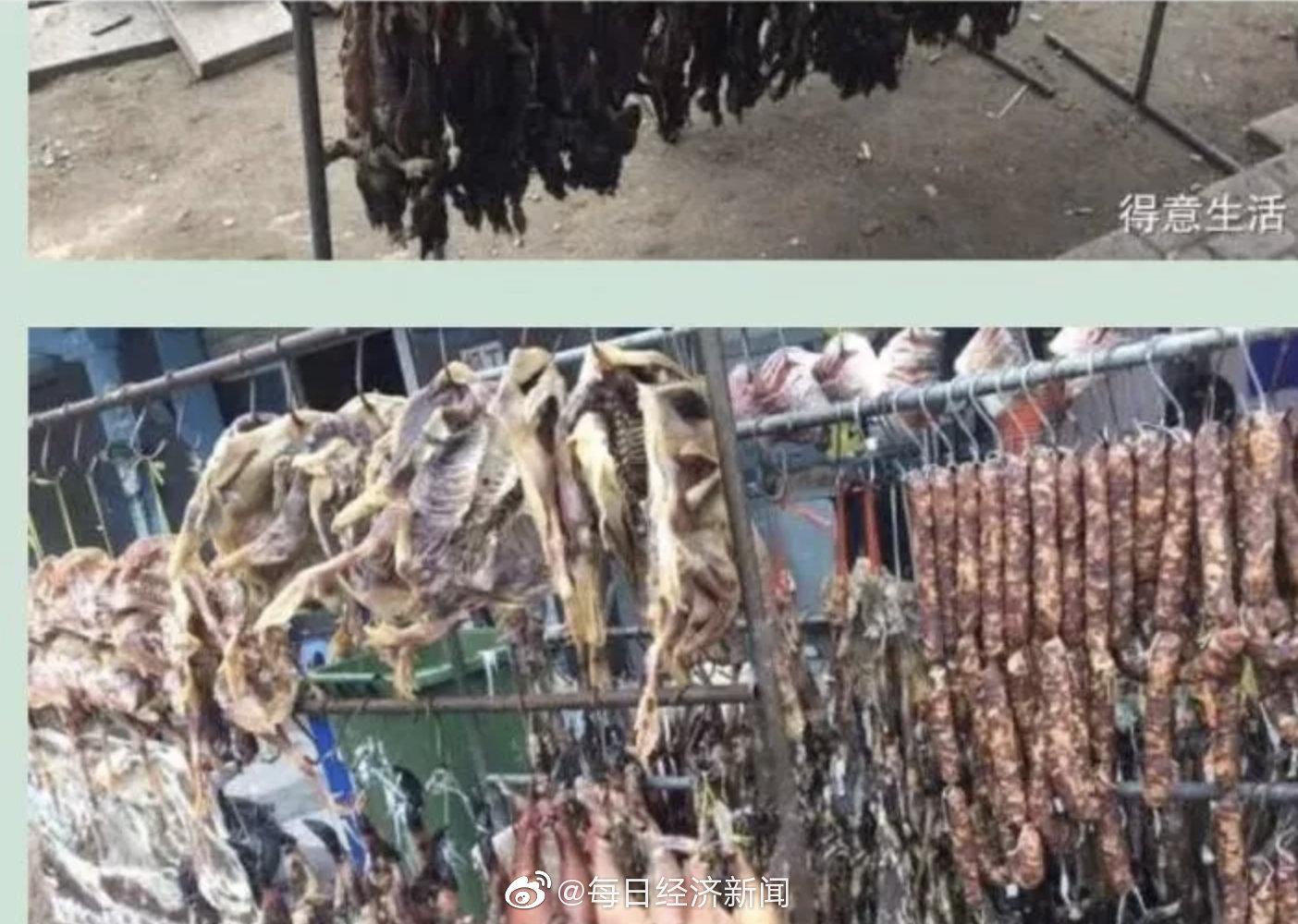 野生 武漢 動物 市場