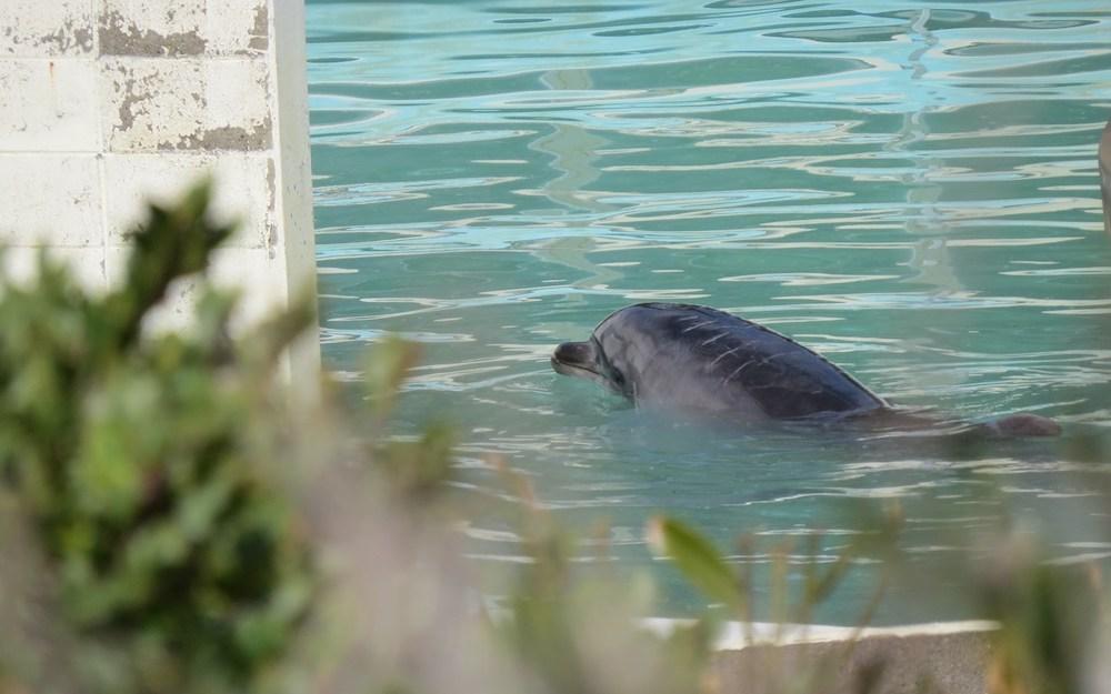 「甜蜜」卻孤獨而死的海豚媽媽(上)