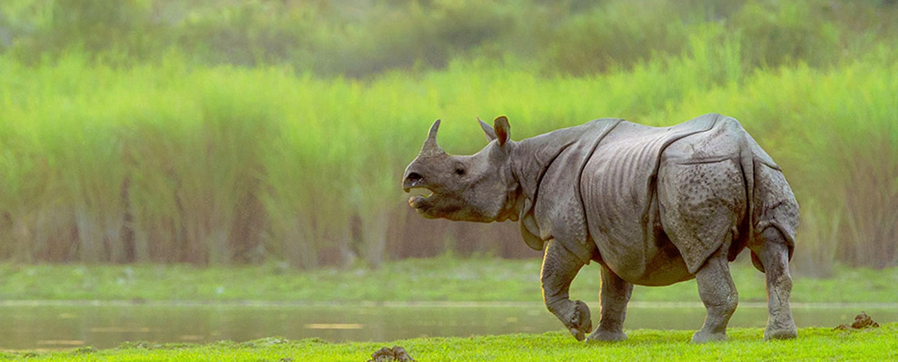 kaziranga national park3